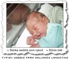 hallandswebbis.jpg
